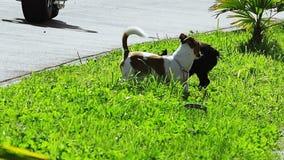 Σκυλιά που παίζουν στην πράσινη χλόη στην ηλιόλουστη θερινή ημέρα απόθεμα βίντεο