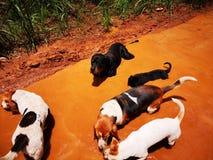 Σκυλιά που παίζουν στη λάσπη στοκ εικόνες