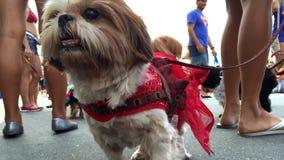 Σκυλιά στα κοστούμια καρναβαλιού σε ένα κόμμα στο Ρίο ντε Τζανέιρο φιλμ μικρού μήκους