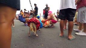 Σκυλιά στα κοστούμια καρναβαλιού στο Ρίο ντε Τζανέιρο Βραζιλία φιλμ μικρού μήκους