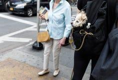 Σκυλιά στην πόλη της Νέας Υόρκης Στοκ εικόνα με δικαίωμα ελεύθερης χρήσης