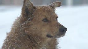 Σκυλιά στη ισχυρή χιονόπτωση φιλμ μικρού μήκους