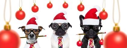 Σκυλιά στις διακοπές Χριστουγέννων Στοκ Εικόνες