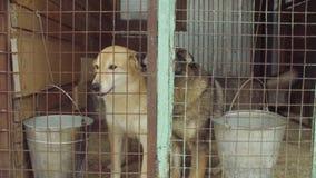 Σκυλιά στο κλουβί σε ένα καταφύγιο σκυλιών φιλμ μικρού μήκους