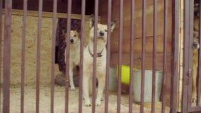 Σκυλιά στο κλουβί σε ένα καταφύγιο σκυλιών απόθεμα βίντεο