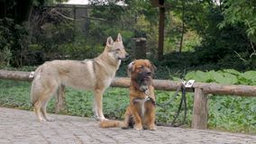 Σκυλιά στο πάρκο απόθεμα βίντεο