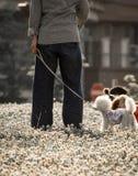 Σκυλιά της Pet που παίζουν στο πάρκο με τον ιδιοκτήτη τους ενώ η γύρη λουλουδιών πετά στον αέρα που θα μπορούσε να προκαλέσει την στοκ εικόνες