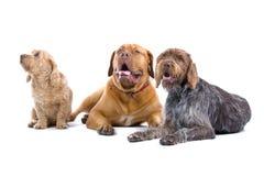 σκυλιά τρία στοκ εικόνες με δικαίωμα ελεύθερης χρήσης