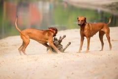 Σκυλιά υπαίθρια Στοκ Φωτογραφίες