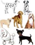 σκυλιά απεικόνιση αποθεμάτων