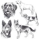 σκυλιά διανυσματική απεικόνιση