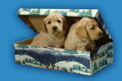 σκυλιά Στοκ εικόνα με δικαίωμα ελεύθερης χρήσης