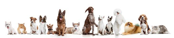 Σκυλιά Differents που εξετάζουν τη κάμερα που απομονώνεται σε ένα άσπρο υπόβαθρο στοκ εικόνα με δικαίωμα ελεύθερης χρήσης