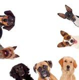 Σκυλιά Differents που εξετάζουν τη κάμερα Στοκ φωτογραφία με δικαίωμα ελεύθερης χρήσης