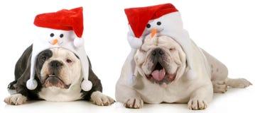 Σκυλιά Santa στοκ φωτογραφία