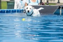 Σκυλιών σε ένα παιχνίδι και παιχνίδι στη λίμνη στοκ φωτογραφία με δικαίωμα ελεύθερης χρήσης