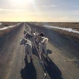 Σκυλιών στην Ισλανδία Στοκ φωτογραφίες με δικαίωμα ελεύθερης χρήσης