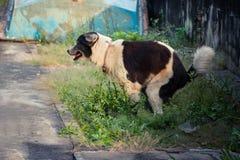 Σκυλιών υπαίθριο στοκ εικόνες