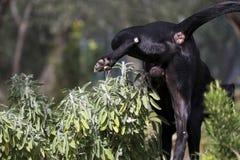 σκυλιών στοκ εικόνα με δικαίωμα ελεύθερης χρήσης