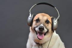 σκυλόσπιτο του DJ στοκ εικόνα με δικαίωμα ελεύθερης χρήσης
