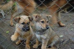 Σκυλάκια πίσω από οδοντωτό - καλώδιο Στοκ Φωτογραφία