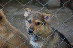 Σκυλάκια πίσω από οδοντωτό - καλώδιο Στοκ φωτογραφία με δικαίωμα ελεύθερης χρήσης