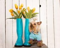 Σκυλάκι άνοιξη Στοκ Φωτογραφίες