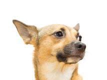 σκυλάκι αστείο Στοκ φωτογραφίες με δικαίωμα ελεύθερης χρήσης