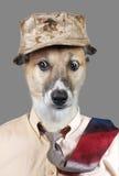 σκυλάκι αστείο Στοκ εικόνα με δικαίωμα ελεύθερης χρήσης