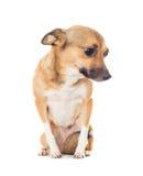 σκυλάκι αστείο Στοκ φωτογραφία με δικαίωμα ελεύθερης χρήσης