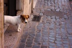 Σκυλάκι που εξετάζει τη κάμερα Στοκ φωτογραφία με δικαίωμα ελεύθερης χρήσης