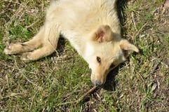 Σκυλί άνοιξη Στοκ φωτογραφία με δικαίωμα ελεύθερης χρήσης