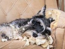 σκυλί άτακτο στοκ εικόνες