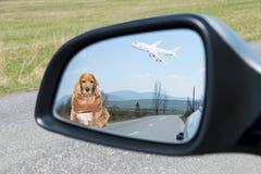 Σκυλί έτοιμο να κάνει ένα ταξίδι Στοκ εικόνα με δικαίωμα ελεύθερης χρήσης