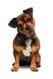 σκυλί λίγα Στοκ φωτογραφία με δικαίωμα ελεύθερης χρήσης