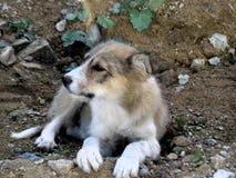 σκυλί λίγα Στοκ Φωτογραφίες