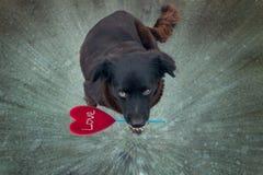 Σκυλί αγάπης Στοκ Εικόνες