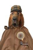 Σκυλί λαγωνικών με την ενίσχυση - γυαλί και σωλήνας στοκ φωτογραφία με δικαίωμα ελεύθερης χρήσης