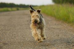 Σκυλί αεροτομών Στοκ Εικόνες