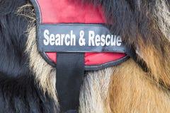 Σκυλί αναζήτησης και διάσωσης Στοκ φωτογραφία με δικαίωμα ελεύθερης χρήσης