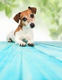 σκυλί ανασκόπησης φυσικ κάθετος Στοκ φωτογραφία με δικαίωμα ελεύθερης χρήσης