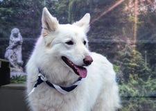 Σκυλί ανιχνεύσεων Στοκ Φωτογραφία