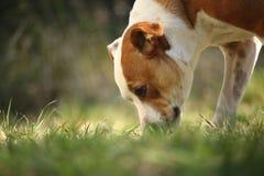 Σκυλί από το έδαφος Στοκ Φωτογραφίες