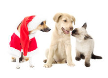 σκυλί αστείο Στοκ φωτογραφία με δικαίωμα ελεύθερης χρήσης