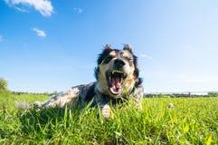 σκυλί αστείο Στοκ εικόνες με δικαίωμα ελεύθερης χρήσης