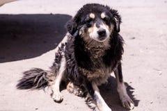 σκυλί δασύτριχο Στοκ Φωτογραφίες