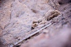 σκυλί δασύτριχο Στοκ φωτογραφία με δικαίωμα ελεύθερης χρήσης