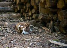 Σκυλί αυλών Στοκ φωτογραφία με δικαίωμα ελεύθερης χρήσης