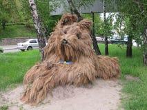 Σκυλί αχύρου Στοκ Εικόνες