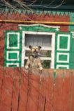 Σπίτι σκυλιών. Στοκ φωτογραφία με δικαίωμα ελεύθερης χρήσης